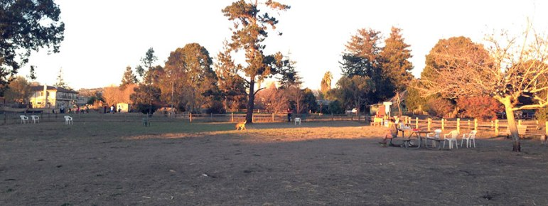 chanticleer-dog-park