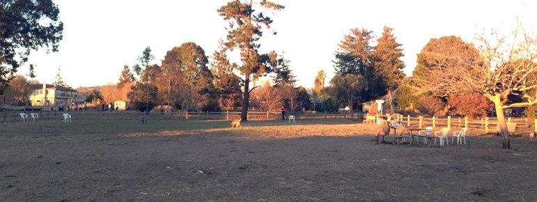 chanticleer-dog-park